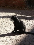 coloseum cat