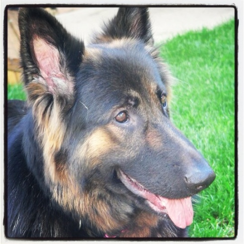 We had one of the worst things happen, Angel, Sammy's German Shepherd had to go to doggy heaven. So very heartbreaking.